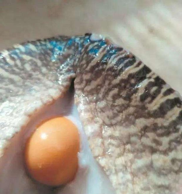 Mua 5 con ốc sên tiếp đãi khách quý, người đàn ông ngỡ ngàng khi phát hiện dị vật bên trong khiến cuộc đời rẽ sang hướng khác - Ảnh 2.