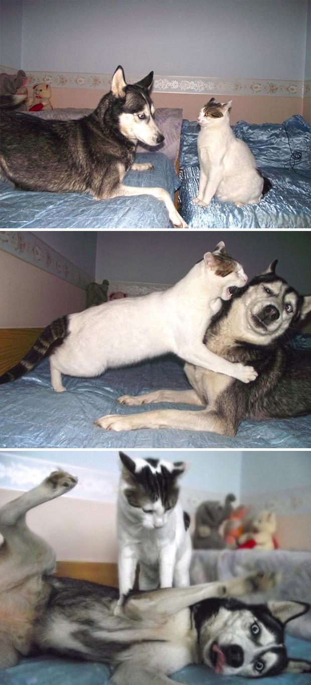 17 khoảnh khắc cho thấy Husky là giống chó ngáo ngơ, lười biếng và không dũng cảm như quảng cáo - Ảnh 14.