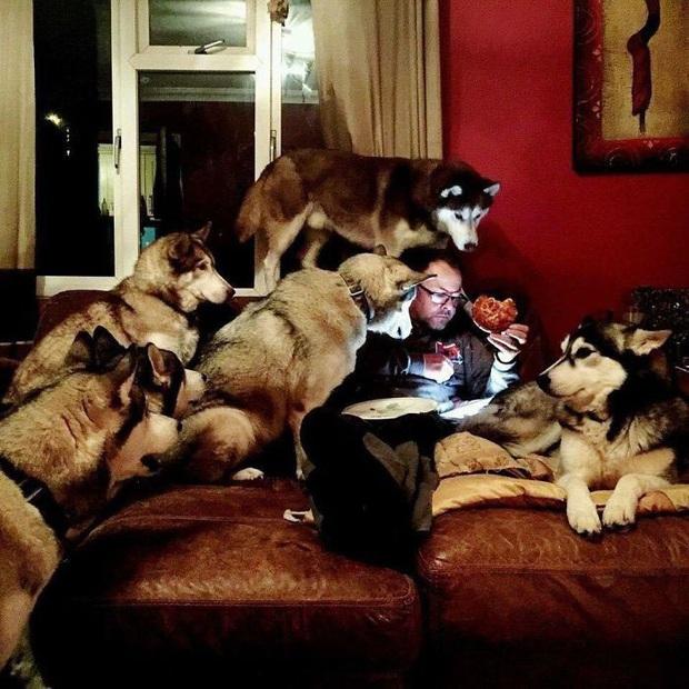 17 khoảnh khắc cho thấy Husky là giống chó ngáo ngơ, lười biếng và không dũng cảm như quảng cáo - Ảnh 15.
