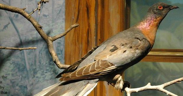 Những loài động vật tuyệt chủng vì sự thiếu hiểu biết của loài người - Ảnh 8.
