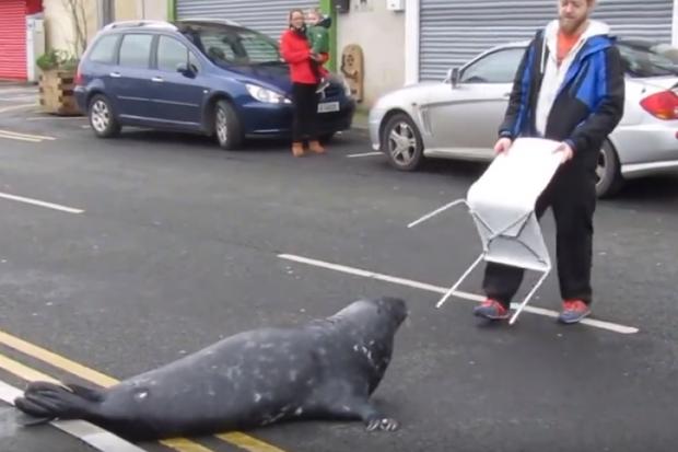 Sammy, chú hải cẩu béo ú thân thiện nhưng ngày 3 bữa vào chợ xin ăn khiến người dân điên đầu - Ảnh 2.