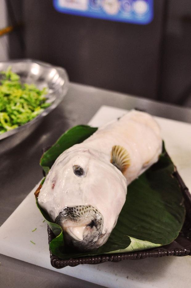 """Loài cá có hình thù xấu xí nhưng được mệnh danh là """"mỹ nhân ngư"""" Việt Nam, giới đại gia chi cả triệu để ăn dù cực độc - Ảnh 2."""