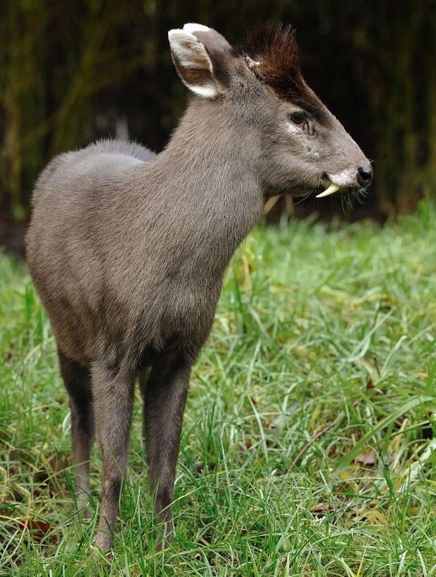 Những loài động vật có ngoại hình sai trái, tác phẩm của mẹ thiên nhiên khi đang khó ở - Ảnh 2.