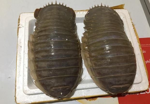 """Loại hải sản được cho là ngon hơn cả tôm hùm ở Việt Nam, vì hiếm có khó tìm nên được rao bán với giá """"đắt xắt ra miếng""""? - Ảnh 4."""
