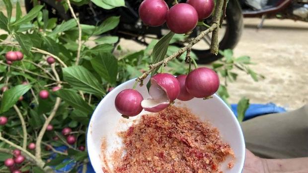 Việt Nam có 10 loại trái cây cực hiếm người biết mọc đầy ở các vùng quê, nghe tên thôi đã thấy lạ chứ nói chi ăn thử - Ảnh 3.