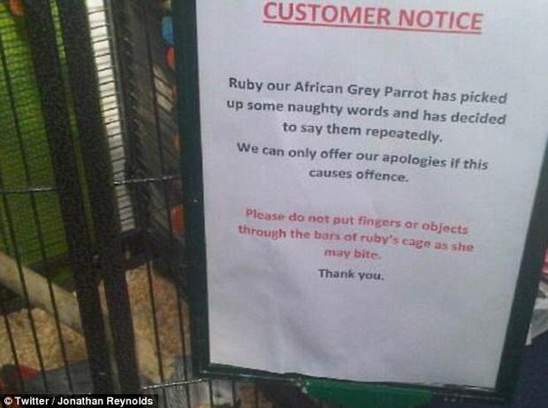 5 con vẹt bị đuổi khỏi công viên vì dạy nhau chửi bậy rồi chửi luôn cả khách tham quan - Ảnh 4.