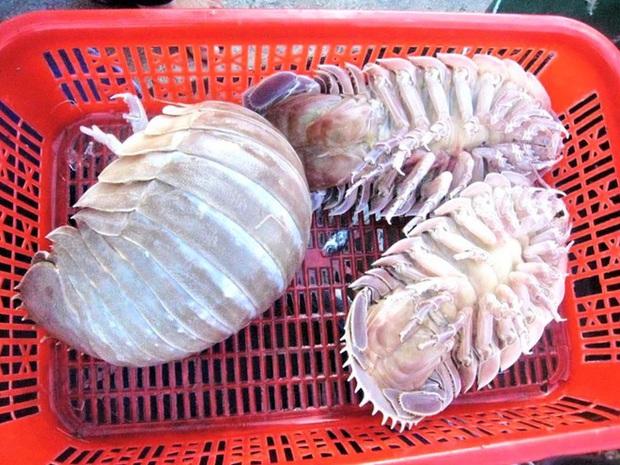 """Loại hải sản được cho là ngon hơn cả tôm hùm ở Việt Nam, vì hiếm có khó tìm nên được rao bán với giá """"đắt xắt ra miếng""""? - Ảnh 6."""