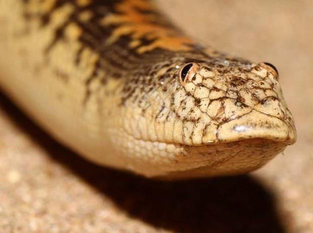 Những loài động vật có ngoại hình sai trái, tác phẩm của mẹ thiên nhiên khi đang khó ở - Ảnh 14.