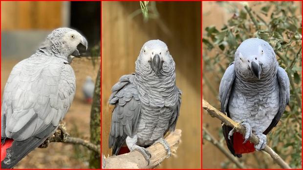 5 con vẹt bị đuổi khỏi công viên vì dạy nhau chửi bậy rồi chửi luôn cả khách tham quan - Ảnh 1.