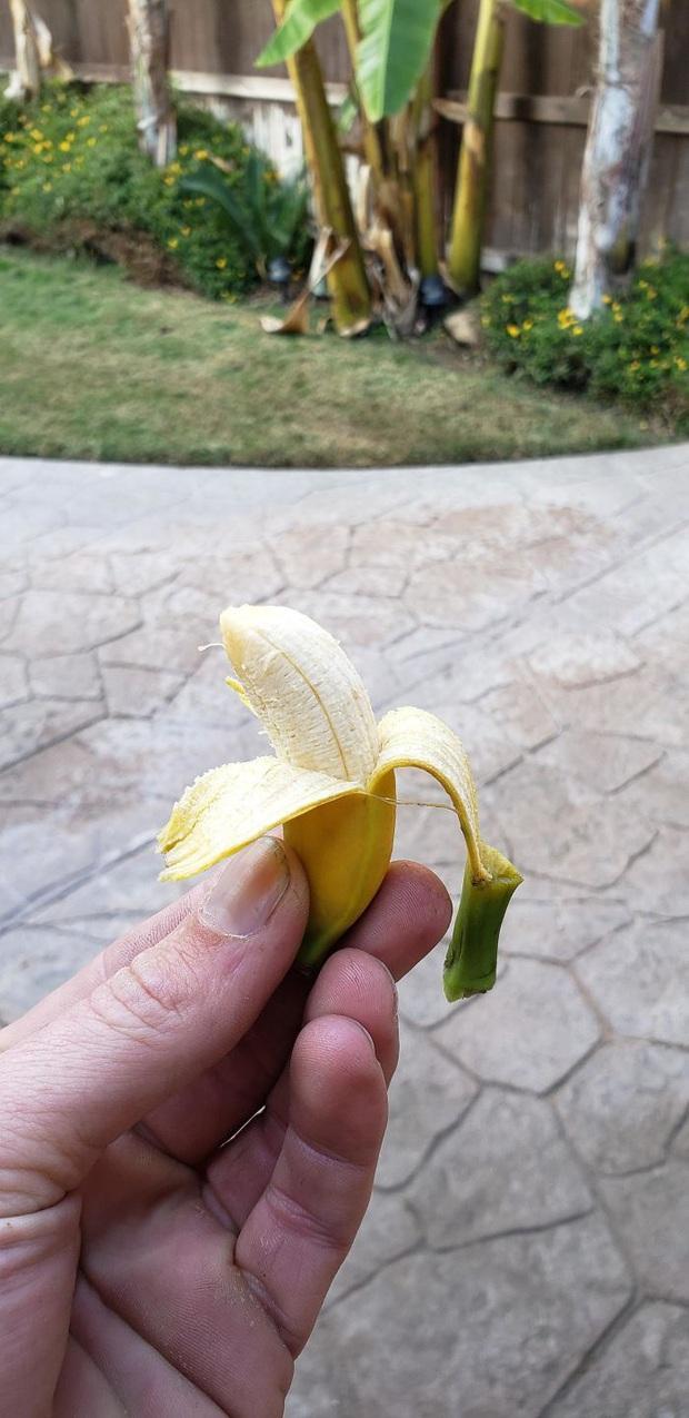Những nông dân xui xẻo nhất hành tinh: Tốn thời gian và công sức nuôi trồng cây trái, đến lúc thu hoạch còn không đủ nhét kẽ răng! - Ảnh 1.