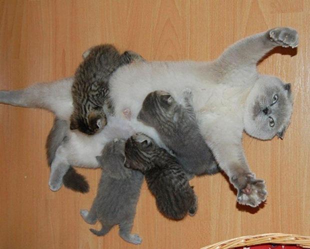Loạt ảnh chứng minh chăm nom nhiều đứa con cùng một lúc chưa bao giờ là việc dễ dàng ngay cả đối với thú cưng, sinh đẻ vỡ kế hoạch mệt lắm! - Ảnh 2.