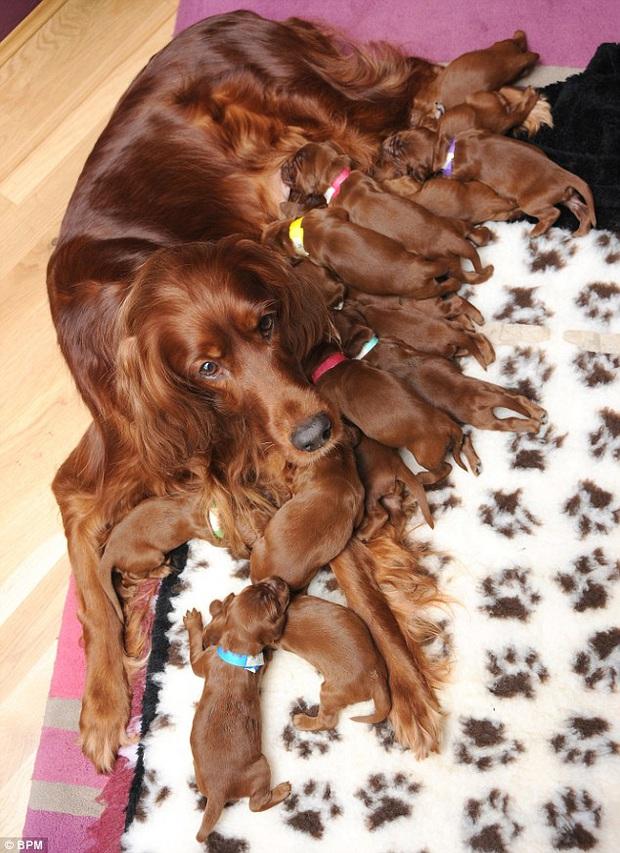 Loạt ảnh chứng minh chăm nom nhiều đứa con cùng một lúc chưa bao giờ là việc dễ dàng ngay cả đối với thú cưng, sinh đẻ vỡ kế hoạch mệt lắm! - Ảnh 16.