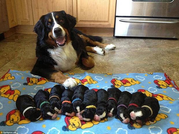 Loạt ảnh chứng minh chăm nom nhiều đứa con cùng một lúc chưa bao giờ là việc dễ dàng ngay cả đối với thú cưng, sinh đẻ vỡ kế hoạch mệt lắm! - Ảnh 4.