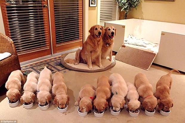 Loạt ảnh chứng minh chăm nom nhiều đứa con cùng một lúc chưa bao giờ là việc dễ dàng ngay cả đối với thú cưng, sinh đẻ vỡ kế hoạch mệt lắm! - Ảnh 6.