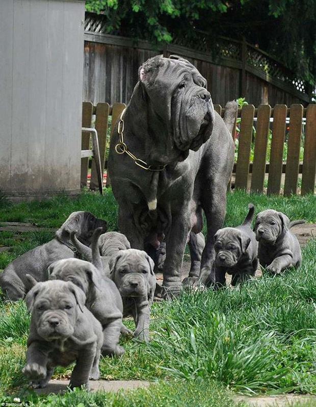 Loạt ảnh chứng minh chăm nom nhiều đứa con cùng một lúc chưa bao giờ là việc dễ dàng ngay cả đối với thú cưng, sinh đẻ vỡ kế hoạch mệt lắm! - Ảnh 7.