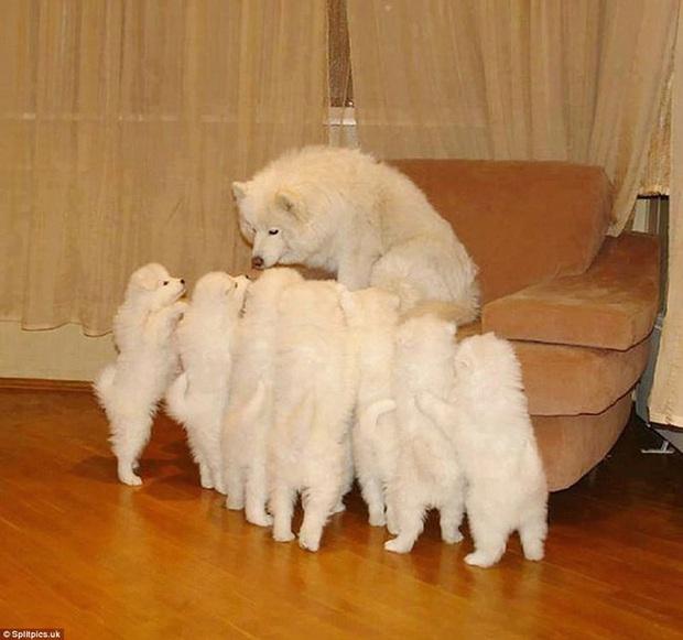 Loạt ảnh chứng minh chăm nom nhiều đứa con cùng một lúc chưa bao giờ là việc dễ dàng ngay cả đối với thú cưng, sinh đẻ vỡ kế hoạch mệt lắm! - Ảnh 8.