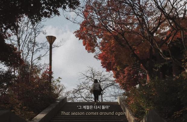 Bộ ảnh xem xong trào dâng thương nhớ Seoul: Đã đến mùa nơi này đẹp nhất, nhưng năm nay ta không thể gặp nhau - Ảnh 2.