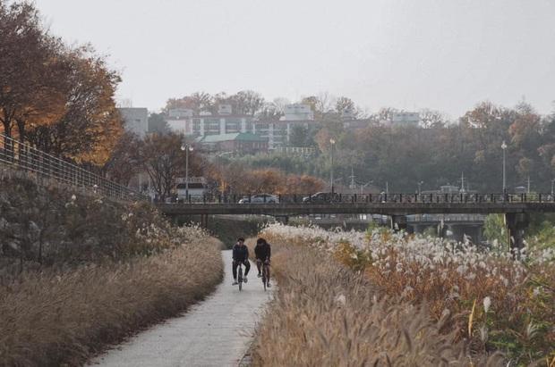 Bộ ảnh xem xong trào dâng thương nhớ Seoul: Đã đến mùa nơi này đẹp nhất, nhưng năm nay ta không thể gặp nhau - Ảnh 8.
