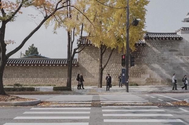 Bộ ảnh xem xong trào dâng thương nhớ Seoul: Đã đến mùa nơi này đẹp nhất, nhưng năm nay ta không thể gặp nhau - Ảnh 9.