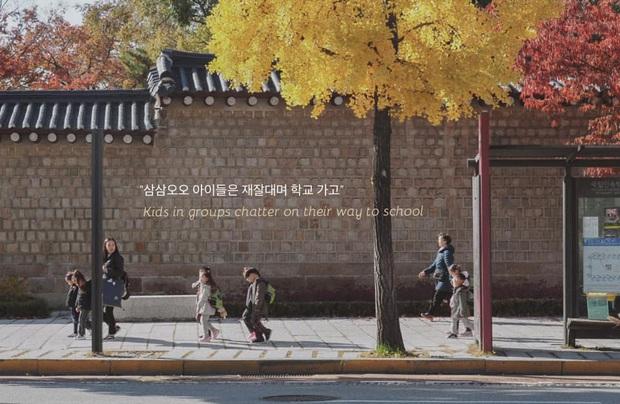 Bộ ảnh xem xong trào dâng thương nhớ Seoul: Đã đến mùa nơi này đẹp nhất, nhưng năm nay ta không thể gặp nhau - Ảnh 7.