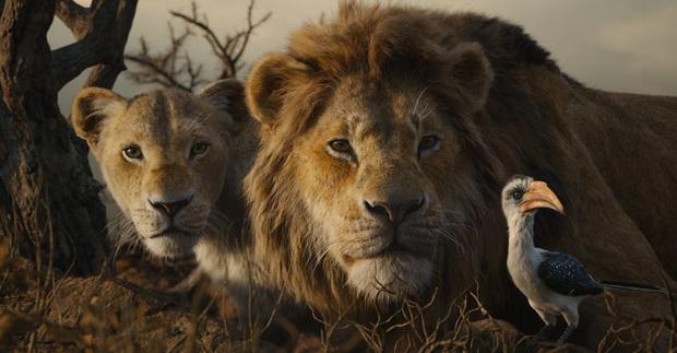 Bị ví như show thế giới động vật, The Lion King vẫn lăm le phần 2 nhưng Simba sẽ bị cắt vai? - Ảnh 1.