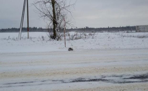 Phát hiện con vật đông cứng giữa đám tuyết trắng không thể nhận ra giống loài gì, người đàn ông can đảm đem về nhà và điều kỳ diệu xảy ra - Ảnh 1.