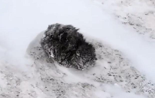 Phát hiện con vật đông cứng giữa đám tuyết trắng không thể nhận ra giống loài gì, người đàn ông can đảm đem về nhà và điều kỳ diệu xảy ra - Ảnh 3.