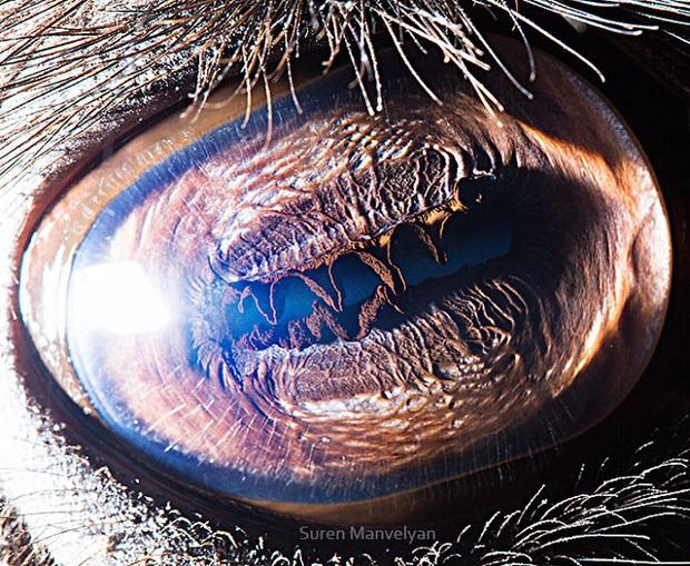 Sâu thẳm bên trong đôi mắt của các loài vật có gì? Loạt ảnh được zoom cận cảnh sau đây chính là câu trả lời cho điều đó - Ảnh 3.