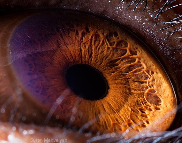 Sâu thẳm bên trong đôi mắt của các loài vật có gì? Loạt ảnh được zoom cận cảnh sau đây chính là câu trả lời cho điều đó - Ảnh 5.