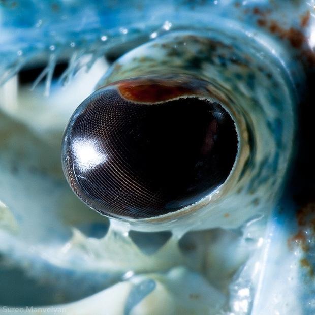 Sâu thẳm bên trong đôi mắt của các loài vật có gì? Loạt ảnh được zoom cận cảnh sau đây chính là câu trả lời cho điều đó - Ảnh 8.