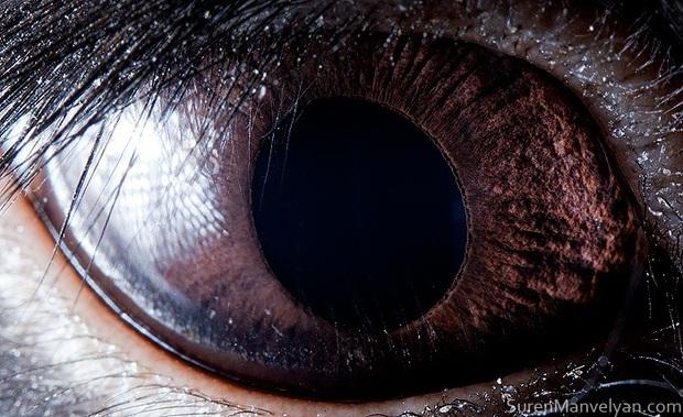 Sâu thẳm bên trong đôi mắt của các loài vật có gì? Loạt ảnh được zoom cận cảnh sau đây chính là câu trả lời cho điều đó - Ảnh 9.