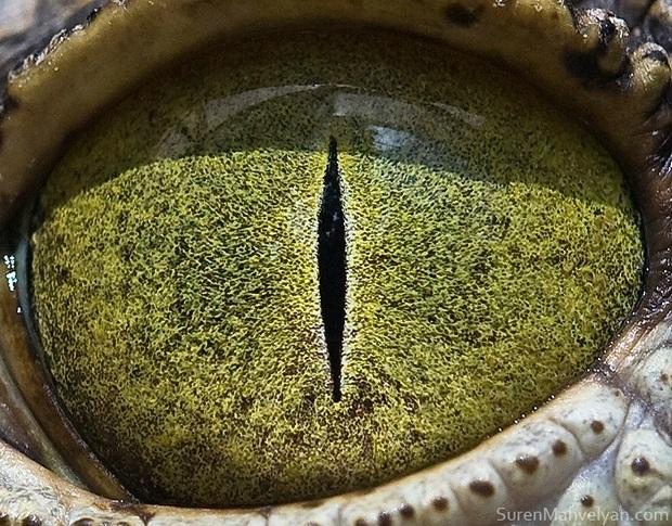 Sâu thẳm bên trong đôi mắt của các loài vật có gì? Loạt ảnh được zoom cận cảnh sau đây chính là câu trả lời cho điều đó - Ảnh 10.