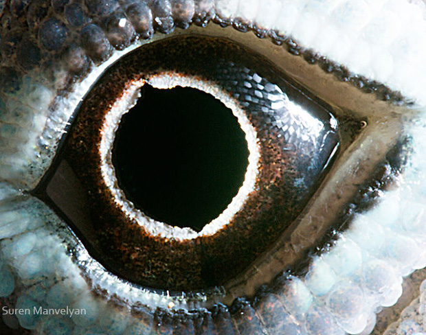 Sâu thẳm bên trong đôi mắt của các loài vật có gì? Loạt ảnh được zoom cận cảnh sau đây chính là câu trả lời cho điều đó - Ảnh 17.
