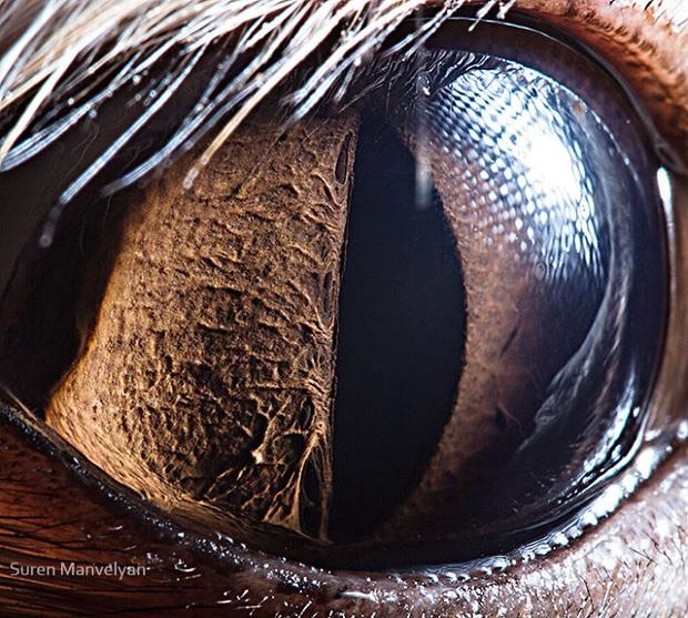 Sâu thẳm bên trong đôi mắt của các loài vật có gì? Loạt ảnh được zoom cận cảnh sau đây chính là câu trả lời cho điều đó - Ảnh 18.