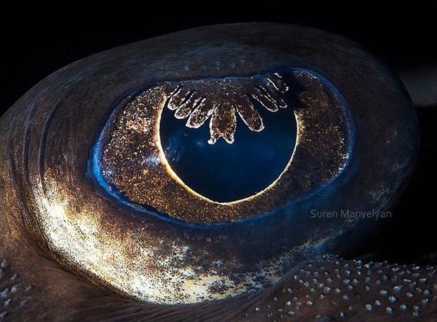 Sâu thẳm bên trong đôi mắt của các loài vật có gì? Loạt ảnh được zoom cận cảnh sau đây chính là câu trả lời cho điều đó - Ảnh 20.