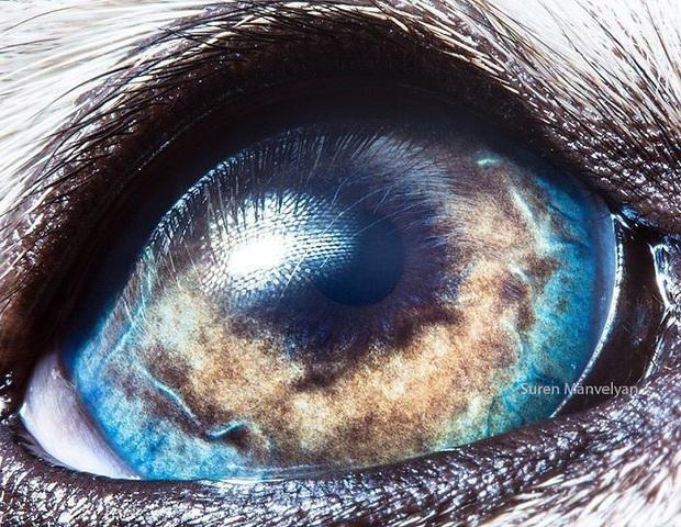 Sâu thẳm bên trong đôi mắt của các loài vật có gì? Loạt ảnh được zoom cận cảnh sau đây chính là câu trả lời cho điều đó - Ảnh 21.