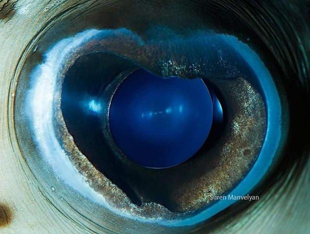 Sâu thẳm bên trong đôi mắt của các loài vật có gì? Loạt ảnh được zoom cận cảnh sau đây chính là câu trả lời cho điều đó - Ảnh 22.