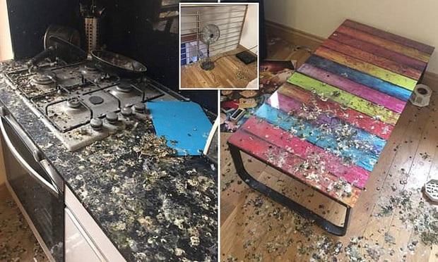 Quên đóng cửa sổ 5 tháng liền, chàng trai tá hỏa nhận ra phòng trọ đã biến thành nhà vệ sinh công cộng cho lũ bồ câu - Ảnh 1.