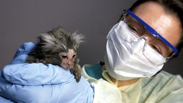 Thiếu khỉ để thử nghiệm, vaccine ngừa COVID-19 có thể ra đời chậm hơn - Ảnh 1.