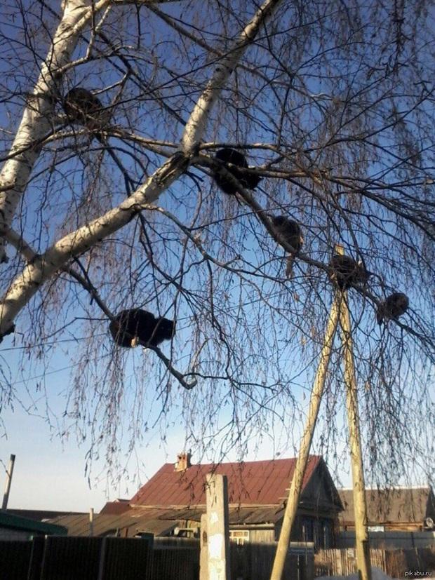 Khi các chú mèo mang thân hình hoàng thượng nhưng tâm hồn tự do hơn cả chim trời - Ảnh 2.