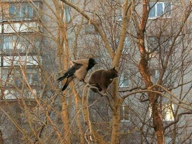 Khi các chú mèo mang thân hình hoàng thượng nhưng tâm hồn tự do hơn cả chim trời - Ảnh 3.
