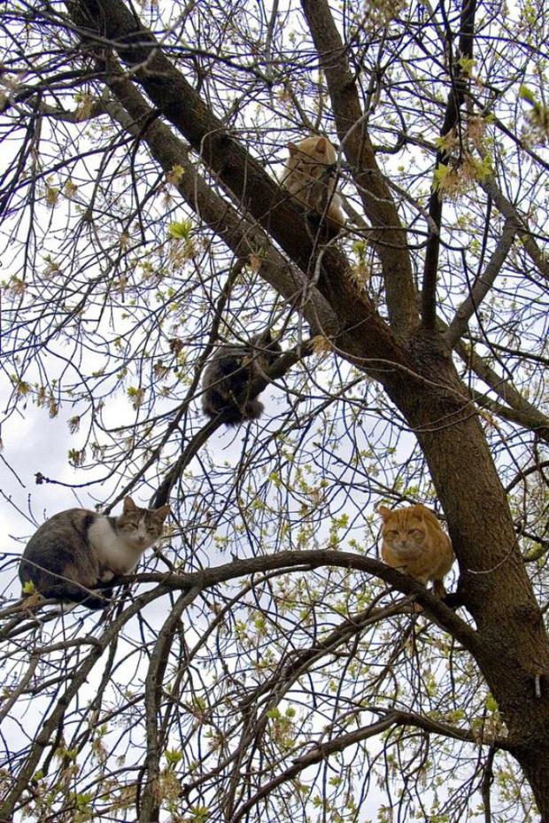 Khi các chú mèo mang thân hình hoàng thượng nhưng tâm hồn tự do hơn cả chim trời - Ảnh 4.