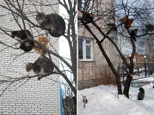 Khi các chú mèo mang thân hình hoàng thượng nhưng tâm hồn tự do hơn cả chim trời - Ảnh 7.