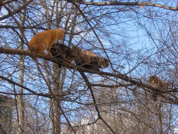Khi các chú mèo mang thân hình hoàng thượng nhưng tâm hồn tự do hơn cả chim trời - Ảnh 8.