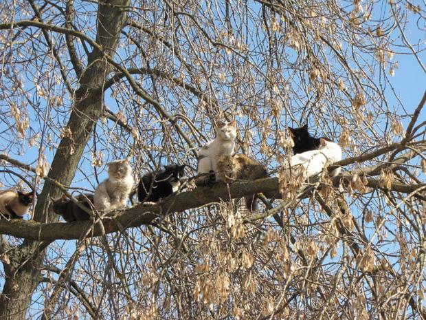 Khi các chú mèo mang thân hình hoàng thượng nhưng tâm hồn tự do hơn cả chim trời - Ảnh 9.