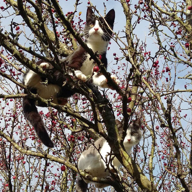 Khi các chú mèo mang thân hình hoàng thượng nhưng tâm hồn tự do hơn cả chim trời - Ảnh 11.