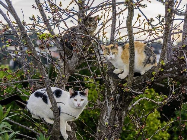 Khi các chú mèo mang thân hình hoàng thượng nhưng tâm hồn tự do hơn cả chim trời - Ảnh 12.