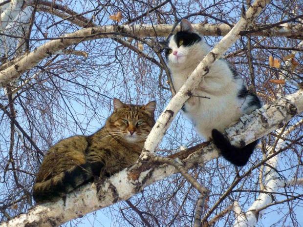 Khi các chú mèo mang thân hình hoàng thượng nhưng tâm hồn tự do hơn cả chim trời - Ảnh 14.