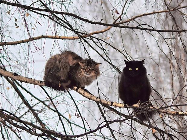 Khi các chú mèo mang thân hình hoàng thượng nhưng tâm hồn tự do hơn cả chim trời - Ảnh 15.