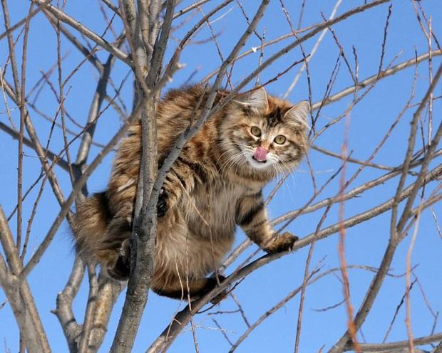 Khi các chú mèo mang thân hình hoàng thượng nhưng tâm hồn tự do hơn cả chim trời - Ảnh 16.
